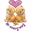 Purrfect - Kittens (kids) Youth T-shirt Tee Shirt