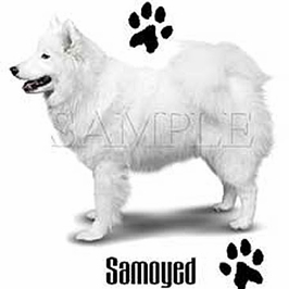 Samoyed T-shirts