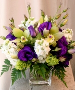 Purple & White Blooms