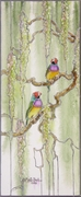 Red Headed Gouldian Finches