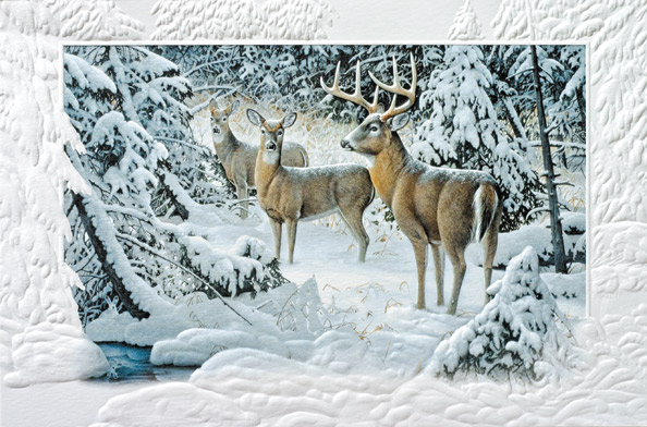 """Boxed Christmas Cards - """"The Edge Of Light"""""""