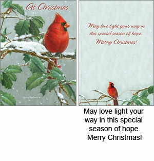 "Boxed Christmas Cards - ""Winter Cardinal"""