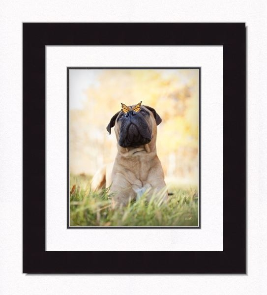 "Framed Picture - ""Bruno - Pug"" - 16in x 20in - Artist Ron Schmidt"