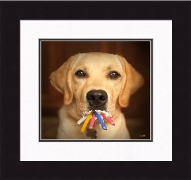 "Framed Picture - ""Flash - Yellow Lab"" - 16in x 16in - Artist Ron Schmidt"