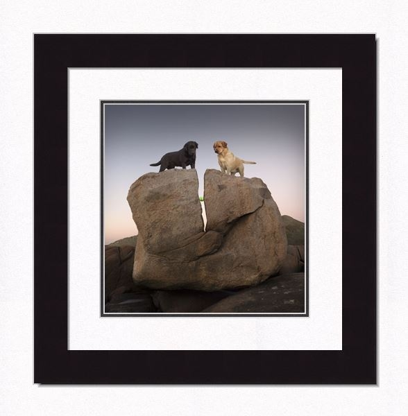 "Framed Picture - ""Rock Candy - Yellow & Black Lab"" - 16in x 17in - Artist Ron Schmidt"