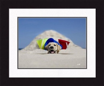 "Framed Picture - ""Scoop"" - 20in x 16in - Artist Ron Schmidt"