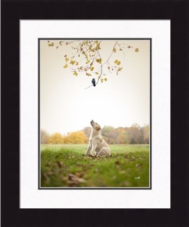 "Framed Picture  - ""Spot"" - 20in  x 24in - Artist Ron Schmidt"