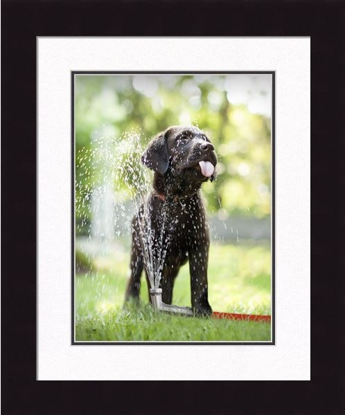 "Framed Picture - ""Squirt - Black Lab"" - 16in x 20in - Artist Ron Schmidt"