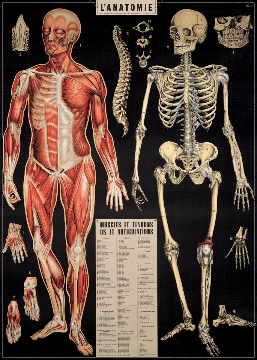 Cool Anatomy Posters Image collections - human body anatomy