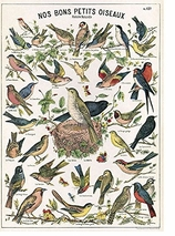 Decorative Art Prints Birds