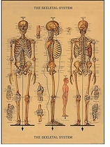 Decorative Art Prints Skeleton