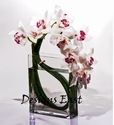 Artful White Orchid