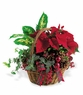 Christmas Dishgarden - Designs East Florist Dallas