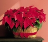 Double Poinsettia Basket - Designs East Florist Dallas