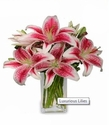 Luxurious Lilies