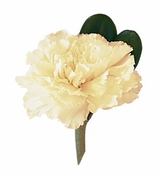 White Carnation Boutonniere
