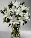 White Oriental Lilies Blooming