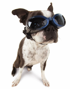 Doggles - Eye Protection for Dogs
