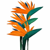 Corn Husk Bird of Paradise - Bouquet of 6