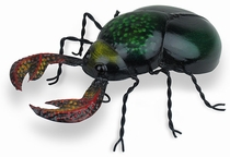 Mexican Painted Tin Beetle