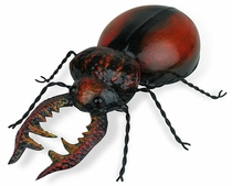 Mexican Painted Tin Goliath Beetle