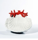 Intrada Italy Shell with Coral Tray