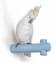 Lladro Parrot Hang I Figurine