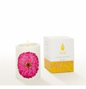 Lucid Liquid Candles -  3x4 Zinnia on Natural Pillar Candle