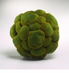 Medium Moss Sphere Poly Foam Moss Green by Cyan Design