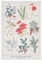 Now Designs Winter Botanicals Dishtowel