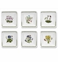 "Portmeirion Botanic Garden Square 6.5"" Bowls (Set of 6)"