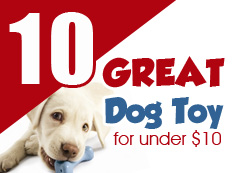 10 Great Dog Toys Under $10