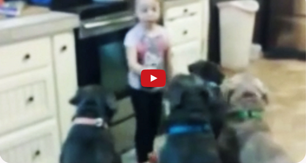 4 Year-Old Girl Feeds Pitbulls: Adorable or Dangerous?