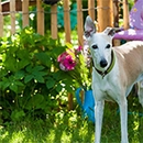 5 Tips To Dog Proof Your Garden
