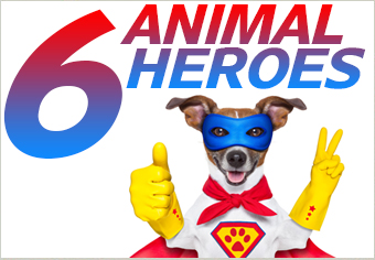6 Life Saving Animals and Their Heroic Deeds