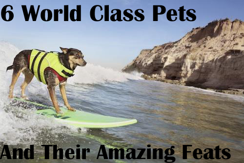 6 World Class Pets and Their Amazing Feats