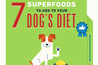 7 Superfoods to Add to Your Dog's Diet
