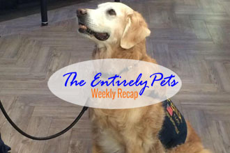 A Hero Returns to the Ground Zero for the First Time, More than 100 Cats are Stuck in Abhorrent Conditions in One Georgia Home, and a Rabies Outbreak Leads to Drastic Measures in China- This & More in the EntirelyPets Weekly Recap (September 8-12, 2014)