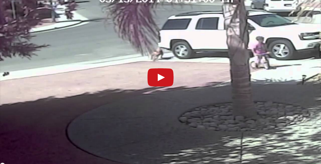 Amazing Cat Fends Off Attacking Dog to Save Child! You WON'T Believe Your Eyes!!
