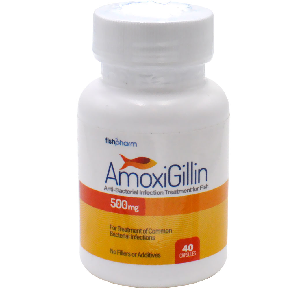 AmoxiGillin Anti-Bacterial Infection Treatment for Fish - 500 mg (40 Capsules)