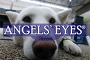 Angels' Eyes for Dogs Reviews