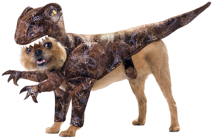 Animal Planet Raptor Dog Costume - Small