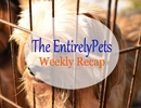 Anti-Puppy Mill Legislation Proves Effective, Russian Bank Loans Cats to Customers, Science Explains the Resemblance between People and Pets – All This and More in this week's EntirelyPets Weekly Recap (August 25-29, 2014)