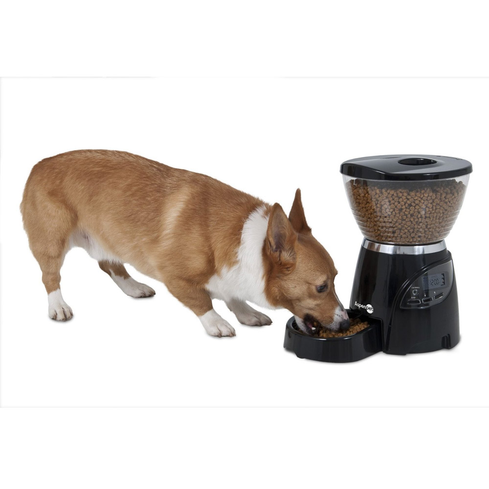 the and feeder feeders best dog pet top picks automatic hmtip get tips