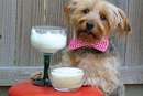 Barkaritas, a Margarita Recipe for Dogs!