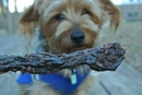 Beef Jerky Recipe for Dogs