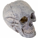 "BioBubble Decorative Human Skull - Large (6.25"" x 3.5"" x 5.5"")"