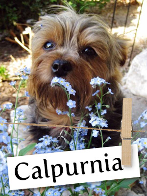 Calpurnia aka Callie Is One Cutie You Have To Meet!