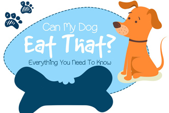 Can My Dog Eat That? A Safety Guide to Giving Human Food to Dogs [Infographic]