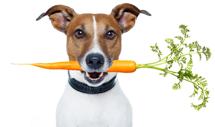 Can Pets Go Vegetarian?